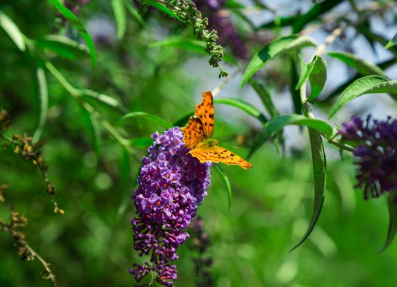 Il risveglio della natura: vivere la primavera in Valtournenche