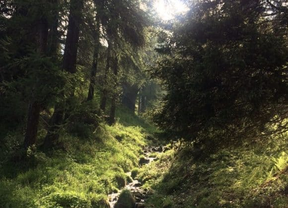 Estate 2020: la rivincita delle mete naturalistiche e del turismo slow
